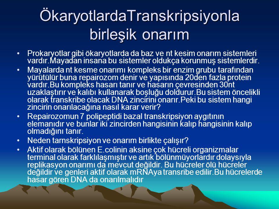 ÖkaryotlardaTranskripsiyonla birleşik onarım •Prokaryotlar gibi ökaryotlarda da baz ve nt kesim onarım sistemleri vardır.Mayadan insana bu sistemler o