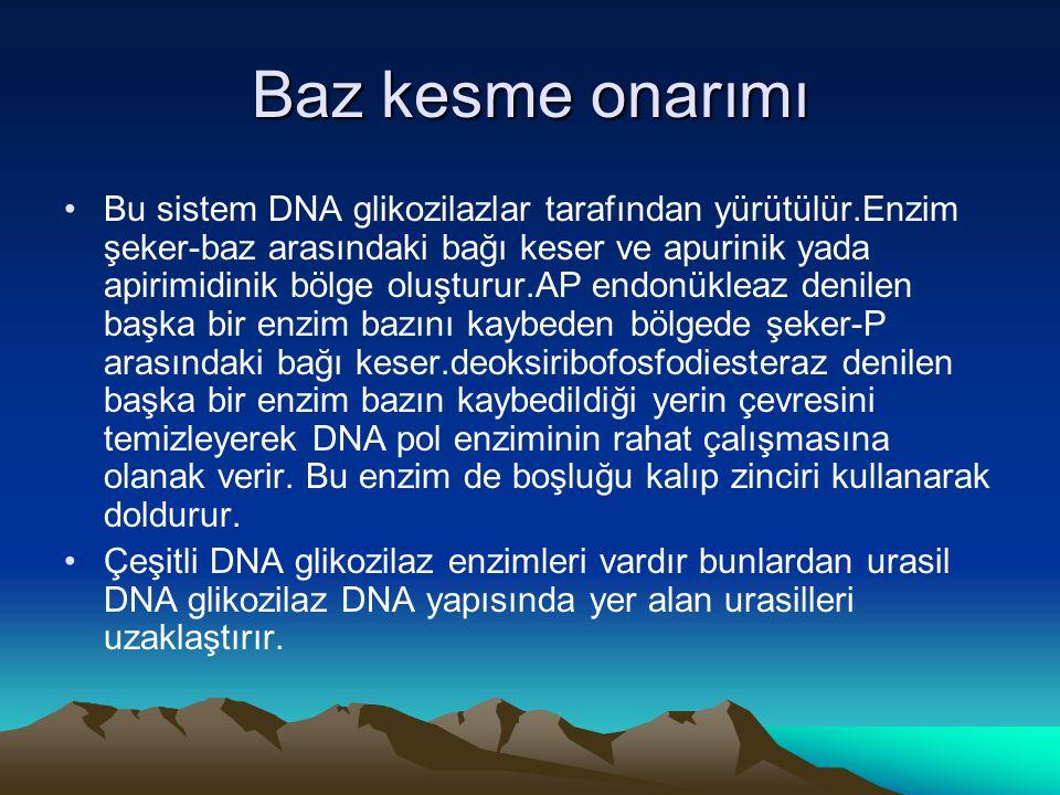 Baz kesme onarımı •Bu sistem DNA glikozilazlar tarafından yürütülür.Enzim şeker-baz arasındaki bağı keser ve apurinik yada apirimidinik bölge oluşturu