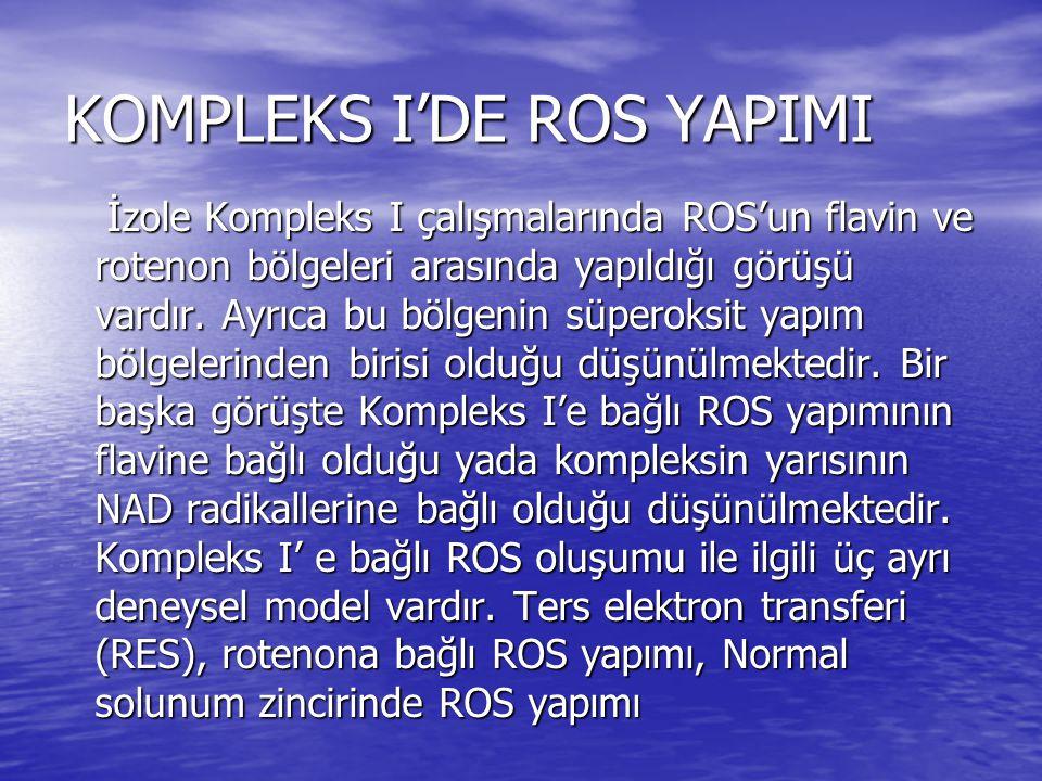 KOMPLEKS I'DE ROS YAPIMI İzole Kompleks I çalışmalarında ROS'un flavin ve rotenon bölgeleri arasında yapıldığı görüşü vardır. Ayrıca bu bölgenin süper