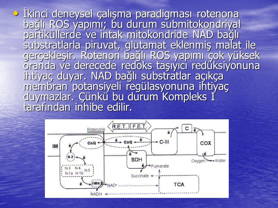 • İkinci deneysel çalışma paradigması rotenona bağlı ROS yapımı; bu durum submitokondriyal partiküllerde ve intak mitokondride NAD bağlı substratlarla