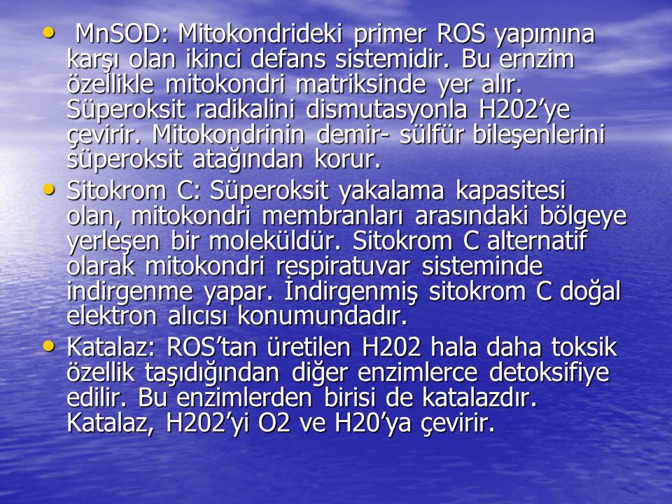 • MnSOD: Mitokondrideki primer ROS yapımına karşı olan ikinci defans sistemidir. Bu ernzim özellikle mitokondri matriksinde yer alır. Süperoksit radik
