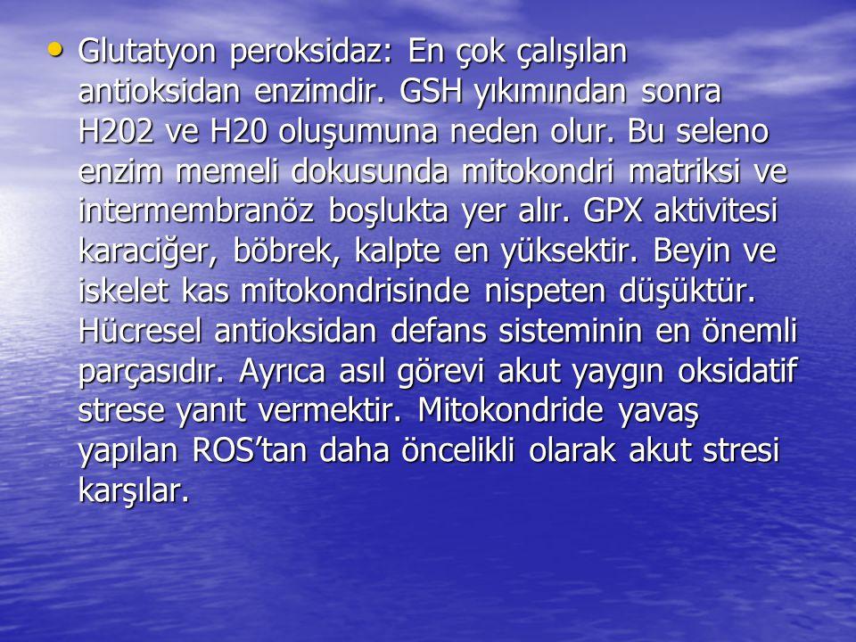 • Glutatyon peroksidaz: En çok çalışılan antioksidan enzimdir. GSH yıkımından sonra H202 ve H20 oluşumuna neden olur. Bu seleno enzim memeli dokusunda