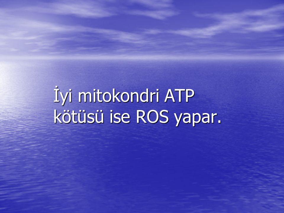 İyi mitokondri ATP kötüsü ise ROS yapar.