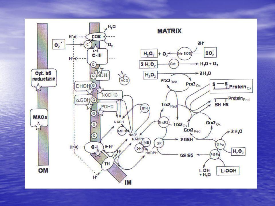 • Kompleks I inhibitörlerinin eksikliğinde ROS yapımı NAD bağımlı substratlarca yüksek membran potansiyeli ile stimüle edilir.
