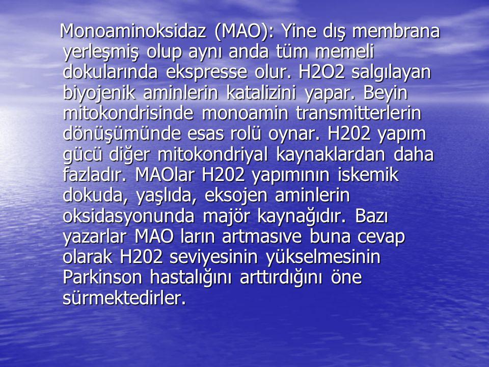 Monoaminoksidaz (MAO): Yine dış membrana yerleşmiş olup aynı anda tüm memeli dokularında ekspresse olur. H2O2 salgılayan biyojenik aminlerin katalizin