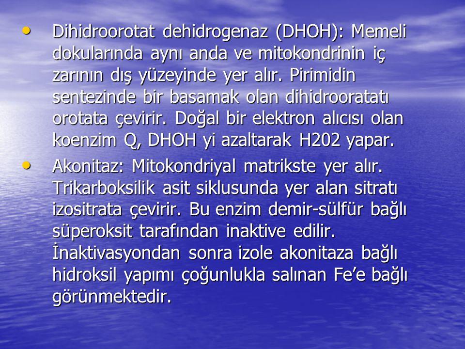 • Dihidroorotat dehidrogenaz (DHOH): Memeli dokularında aynı anda ve mitokondrinin iç zarının dış yüzeyinde yer alır. Pirimidin sentezinde bir basamak