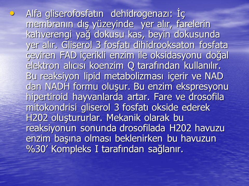 MİTOKONDRİYAL ROS DETOKSİFİKASYON SİSTEMLERİ