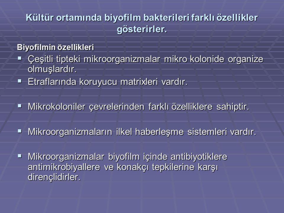 Kültür ortamında biyofilm bakterileri farklı özellikler gösterirler.
