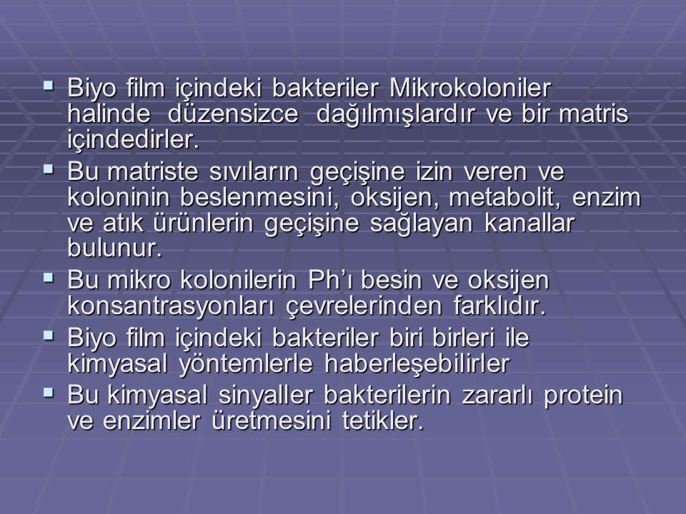  Biyo film içindeki bakteriler Mikrokoloniler halinde düzensizce dağılmışlardır ve bir matris içindedirler.
