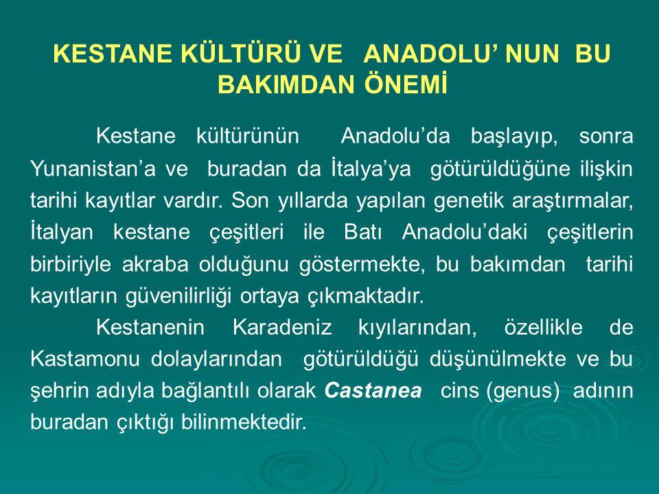 Kestane kültürünün Anadolu'da başlayıp, sonra Yunanistan'a ve buradan da İtalya'ya götürüldüğüne ilişkin tarihi kayıtlar vardır. Son yıllarda yapılan