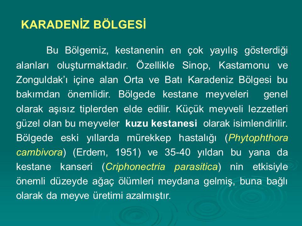 Bu Bölgemiz, kestanenin en çok yayılış gösterdiği alanları oluşturmaktadır. Özellikle Sinop, Kastamonu ve Zonguldak'ı içine alan Orta ve Batı Karadeni