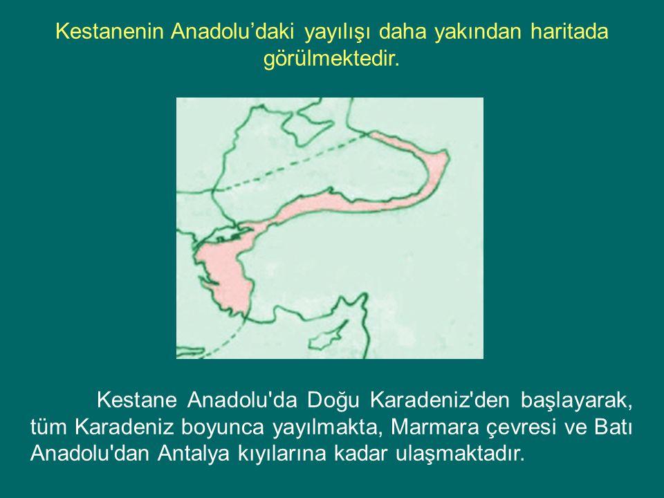 Kestane Anadolu'da Doğu Karadeniz'den başlayarak, tüm Karadeniz boyunca yayılmakta, Marmara çevresi ve Batı Anadolu'dan Antalya kıyılarına kadar ulaşm