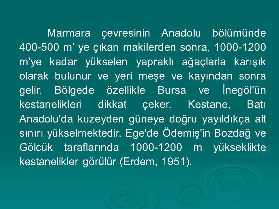 Marmara çevresinin Anadolu bölümünde 400-500 m' ye çıkan makilerden sonra, 1000-1200 m'ye kadar yükselen yapraklı ağaçlarla karışık olarak bulunur ve