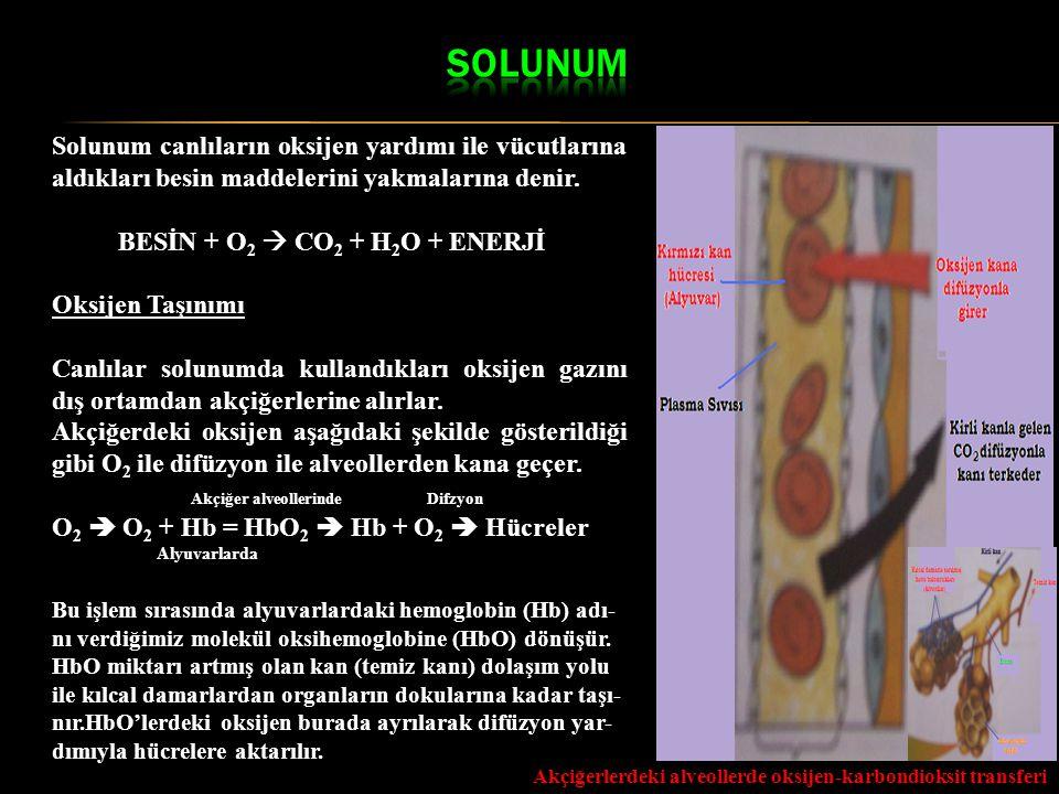 Solunum canlıların oksijen yardımı ile vücutlarına aldıkları besin maddelerini yakmalarına denir. BESİN + O 2  CO 2 + H 2 O + ENERJİ Oksijen Taşınımı