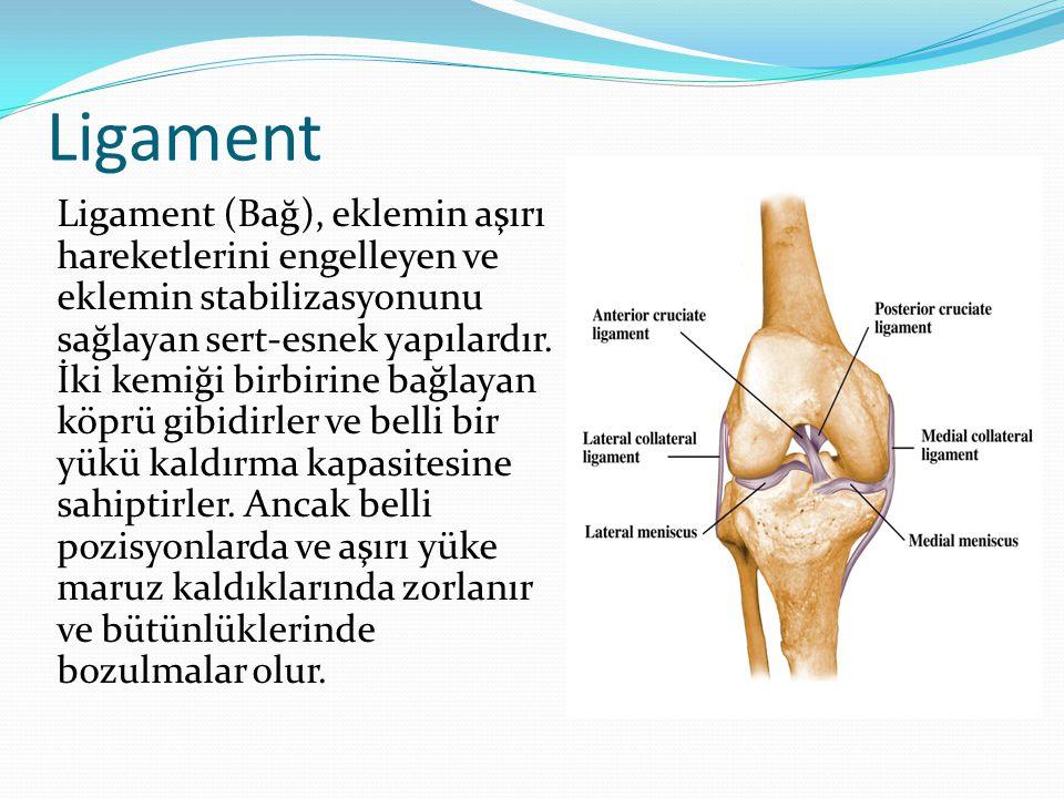 Ligament Ligament (Bağ), eklemin aşırı hareketlerini engelleyen ve eklemin stabilizasyonunu sağlayan sert-esnek yapılardır. İki kemiği birbirine bağla