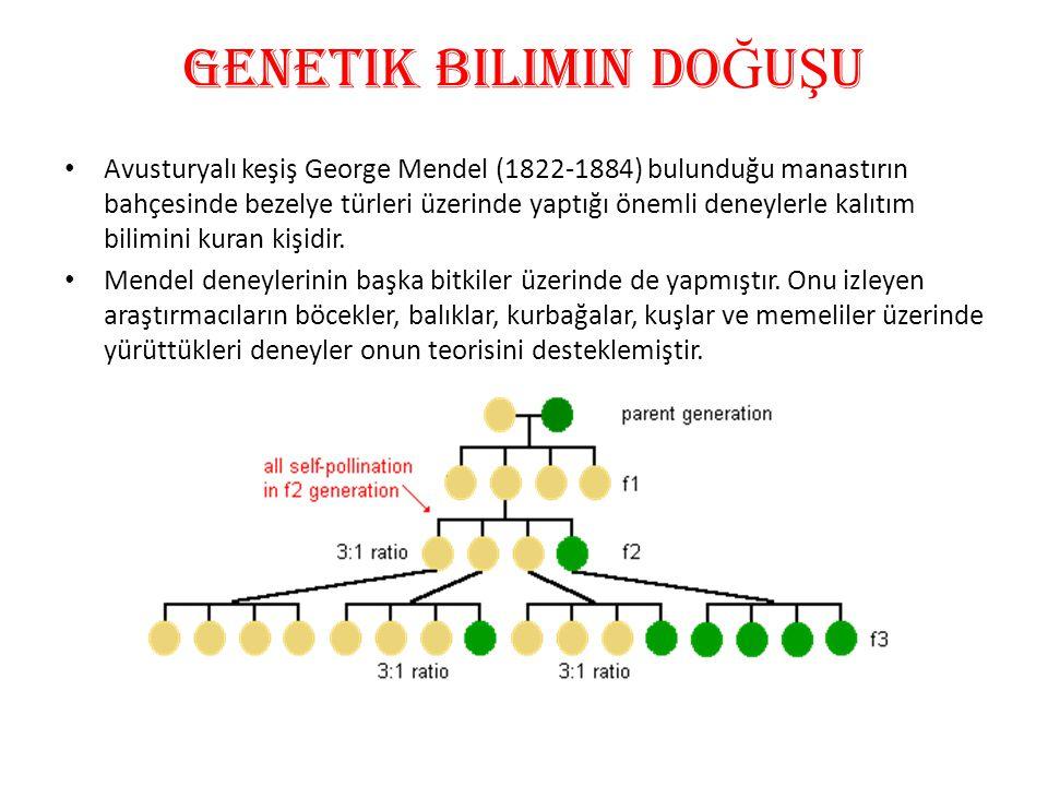 GENetik bilimin do Ğ U Ş U • Avusturyalı keşiş George Mendel (1822-1884) bulunduğu manastırın bahçesinde bezelye türleri üzerinde yaptığı önemli deney
