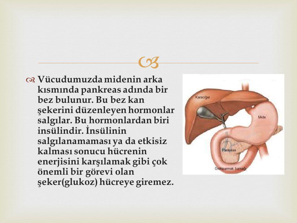   Vücudumuzda midenin arka kısmında pankreas adında bir bez bulunur. Bu bez kan şekerini düzenleyen hormonlar salgılar. Bu hormonlardan biri insülin
