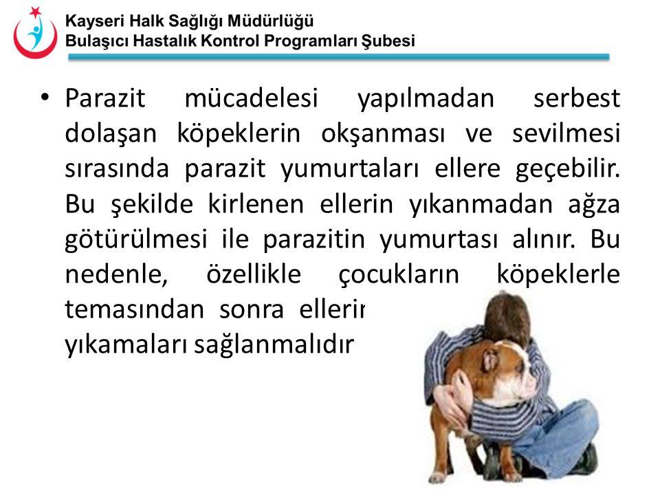 • Parazit mücadelesi yapılmadan serbest dolaşan köpeklerin okşanması ve sevilmesi sırasında parazit yumurtaları ellere geçebilir. Bu şekilde kirlenen