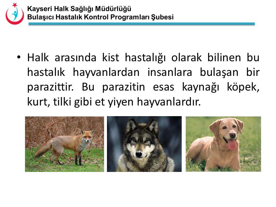 • Halk arasında kist hastalığı olarak bilinen bu hastalık hayvanlardan insanlara bulaşan bir parazittir. Bu parazitin esas kaynağı köpek, kurt, tilki