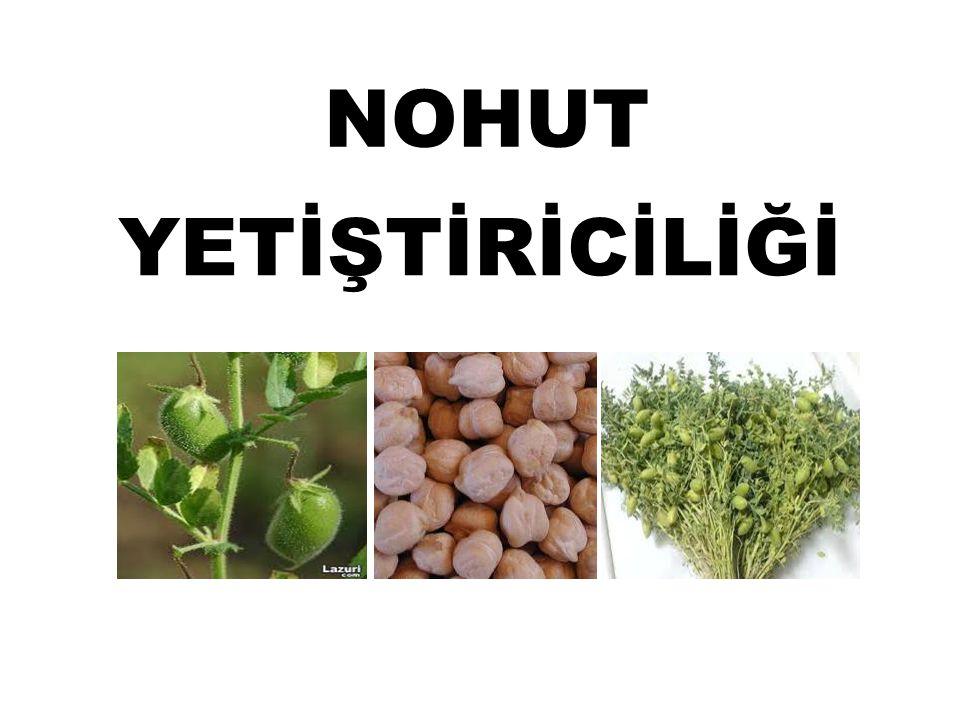 DÜNYADA VE ÜLKEMİZDE NOHUT ÜRETİMİ Nohut (Cicer arietinum L.), binlerce yıldan bu yana tarımı yapılan ender bitkilerden biridir.