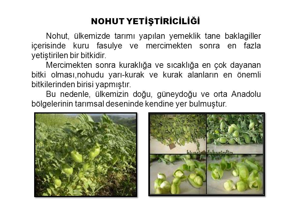 Nohut, ülkemizde tarımı yapılan yemeklik tane baklagiller içerisinde kuru fasulye ve mercimekten sonra en fazla yetiştirilen bir bitkidir. Mercimekten