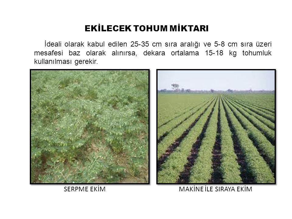 Ülkemizde, 20-30 cm' den 45-70 cm' e kadar değişen sıra aralıklarında ekim yapılmaktadır.