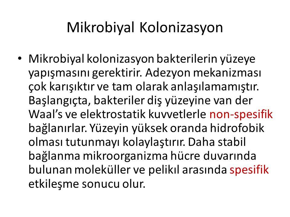 Mikrobiyal kolonizasyon • mikrobiyal kolonizasyon bakterilerin