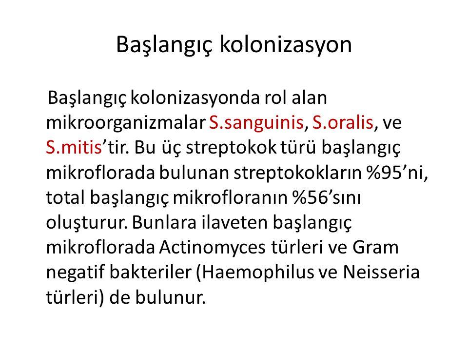 Başlangıç kolonizasyon Başlangıç kolonizasyonda rol alan mikroorganizmalar S.sanguinis, S.oralis, ve S.mitis'tir. Bu üç streptokok türü başlangıç mikr