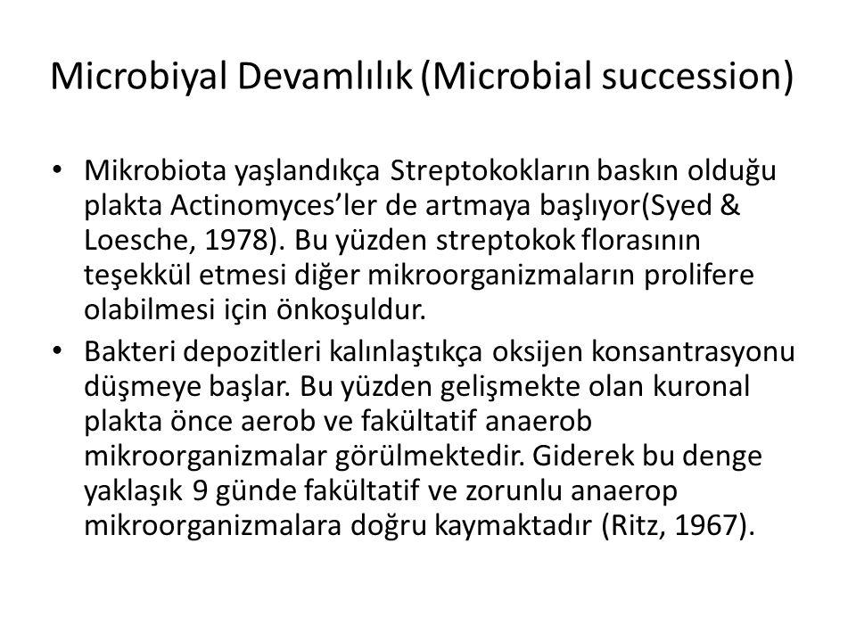 Microbiyal Devamlılık (Microbial succession) • Mikrobiota yaşlandıkça Streptokokların baskın olduğu plakta Actinomyces'ler de artmaya başlıyor(Syed &
