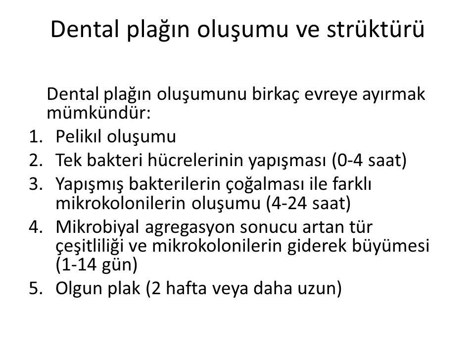 Dental plağın oluşumu ve strüktürü Dental plağın oluşumunu birkaç evreye ayırmak mümkündür: 1.Pelikıl oluşumu 2.Tek bakteri hücrelerinin yapışması (0-