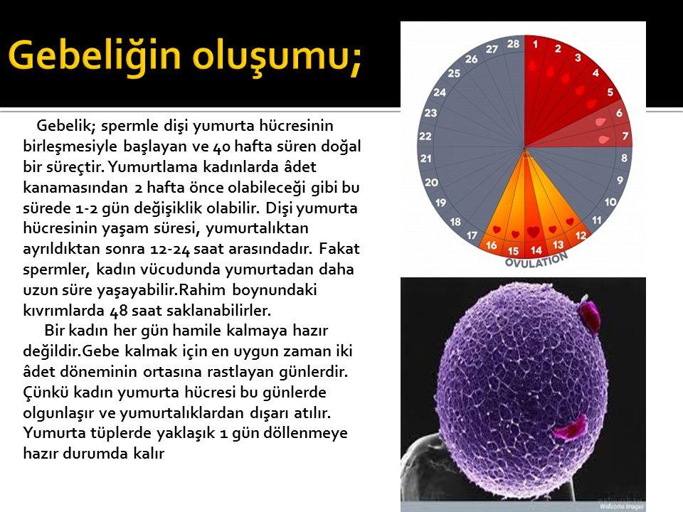 Gebelik; spermle dişi yumurta hücresinin birleşmesiyle başlayan ve 40 hafta süren doğal bir süreçtir. Yumurtlama kadınlarda âdet kanamasından 2 hafta
