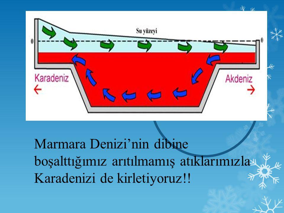 Marmara Denizi'nin dibine boşalttığımız arıtılmamış atıklarımızla Karadenizi de kirletiyoruz!!