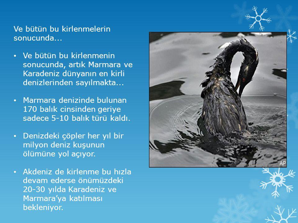 Ve bütün bu kirlenmelerin sonucunda... • Ve bütün bu kirlenmenin sonucunda, artık Marmara ve Karadeniz dünyanın en kirli denizlerinden sayılmakta... •