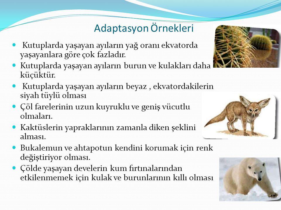 Adaptasyon Örnekleri  Kutuplarda yaşayan ayıların yağ oranı ekvatorda yaşayanlara göre çok fazladır.