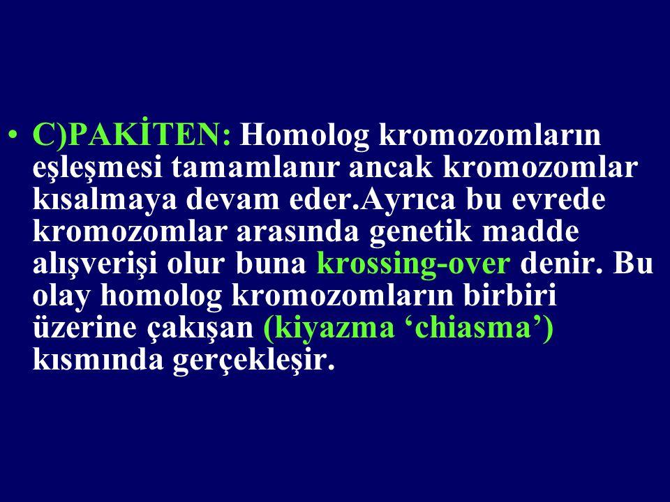 •C)PAKİTEN: Homolog kromozomların eşleşmesi tamamlanır ancak kromozomlar kısalmaya devam eder.Ayrıca bu evrede kromozomlar arasında genetik madde alış