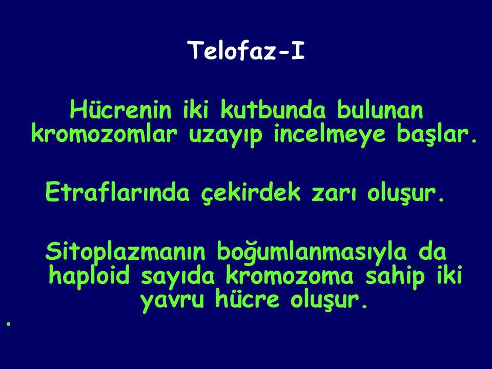 Telofaz-I Hücrenin iki kutbunda bulunan kromozomlar uzayıp incelmeye başlar. Etraflarında çekirdek zarı oluşur. Sitoplazmanın boğumlanmasıyla da haplo