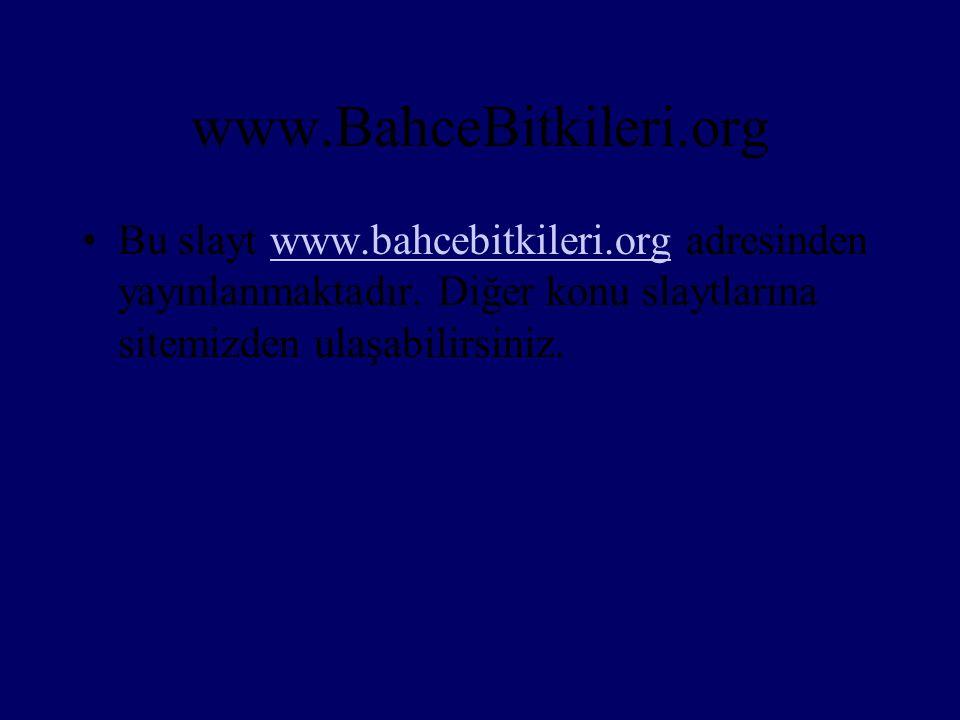 www.BahceBitkileri.org •Bu slayt www.bahcebitkileri.org adresinden yayınlanmaktadır. Diğer konu slaytlarına sitemizden ulaşabilirsiniz.www.bahcebitkil