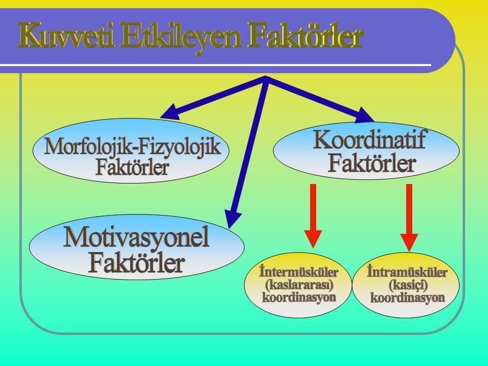 Maksimal kuvvet; Maksimal kuvvet; Çabuk kuvvetin ve kuvvette devamlılığın alt yapısını oluşturur.