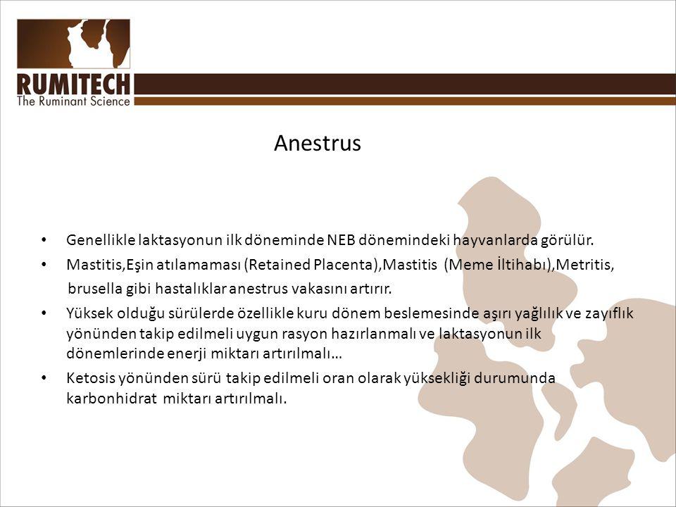 Anestrus • Genellikle laktasyonun ilk döneminde NEB dönemindeki hayvanlarda görülür.