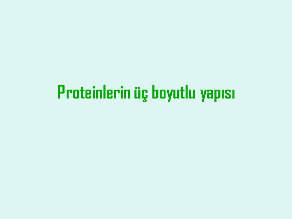 Proteinlerin üç boyutlu yapısı