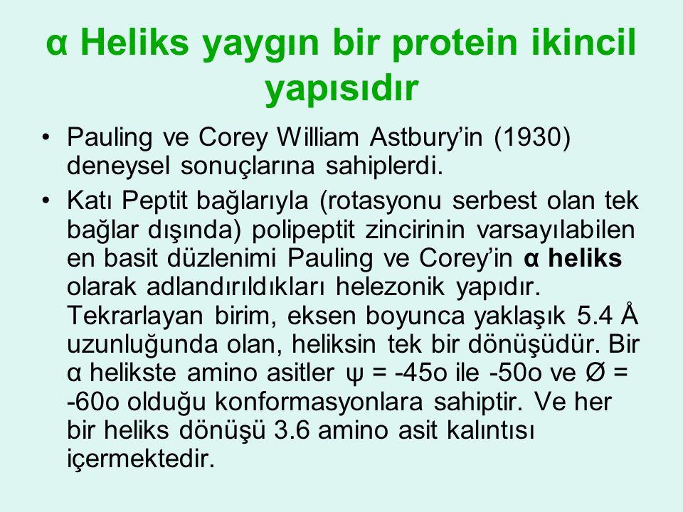 α Heliks yaygın bir protein ikincil yapısıdır •Pauling ve Corey William Astbury'in (1930) deneysel sonuçlarına sahiplerdi. •Katı Peptit bağlarıyla (ro
