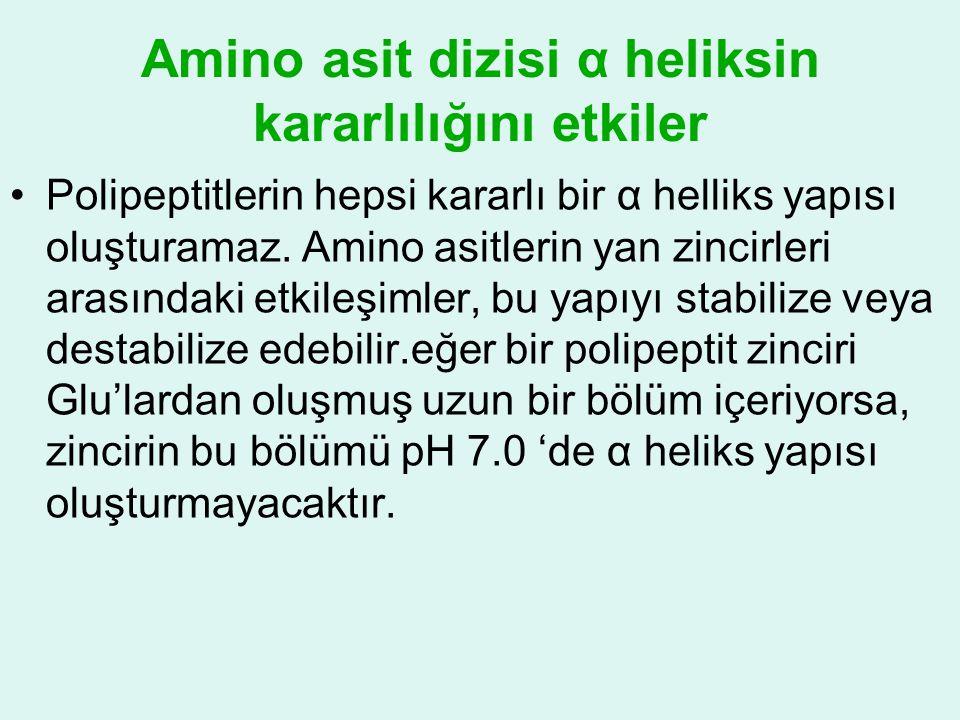 Amino asit dizisi α heliksin kararlılığını etkiler •Polipeptitlerin hepsi kararlı bir α helliks yapısı oluşturamaz. Amino asitlerin yan zincirleri ara