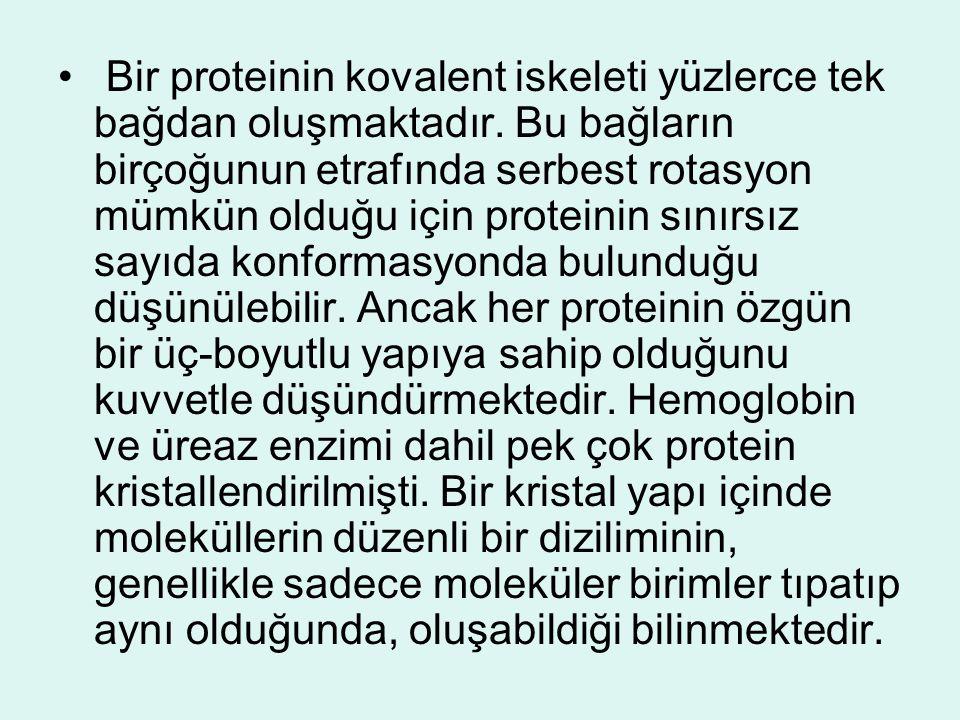 • Bir proteinin kovalent iskeleti yüzlerce tek bağdan oluşmaktadır. Bu bağların birçoğunun etrafında serbest rotasyon mümkün olduğu için proteinin sın