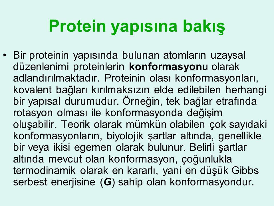 Protein yapısına bakış •Bir proteinin yapısında bulunan atomların uzaysal düzenlenimi proteinlerin konformasyonu olarak adlandırılmaktadır. Proteinin