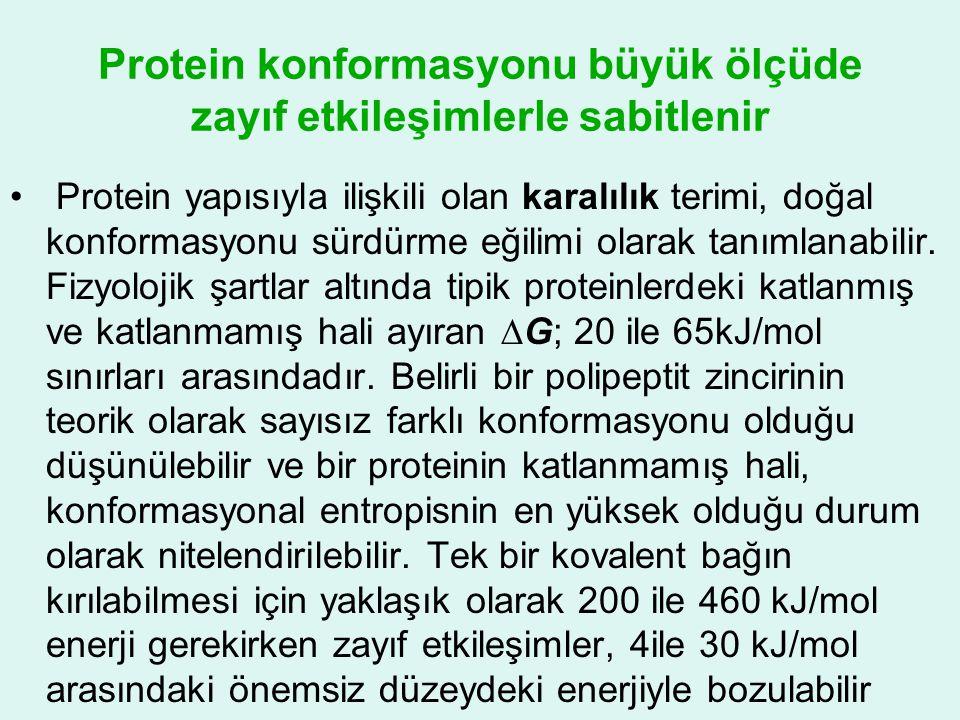 Protein konformasyonu büyük ölçüde zayıf etkileşimlerle sabitlenir • Protein yapısıyla ilişkili olan karalılık terimi, doğal konformasyonu sürdürme eğ