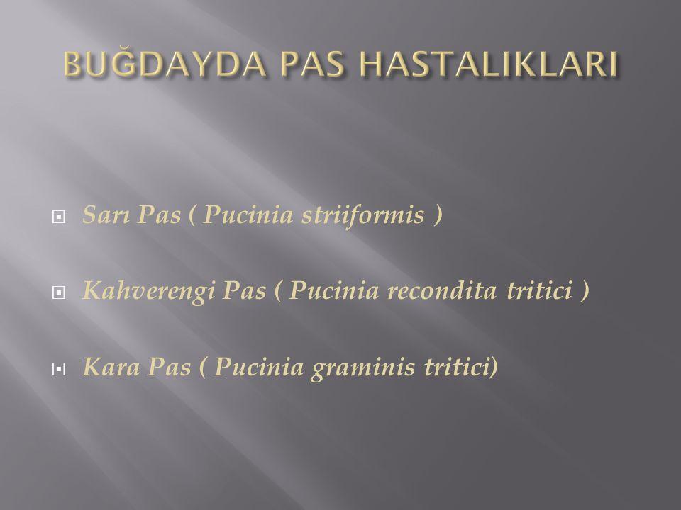  Sarı Pas ( Pucinia striiformis )  Kahverengi Pas ( Pucinia recondita tritici )  Kara Pas ( Pucinia graminis tritici)