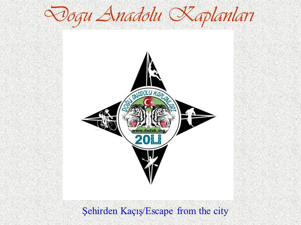 Dogu Anadolu Kaplanları Şehirden Kaçış/Escape from the city