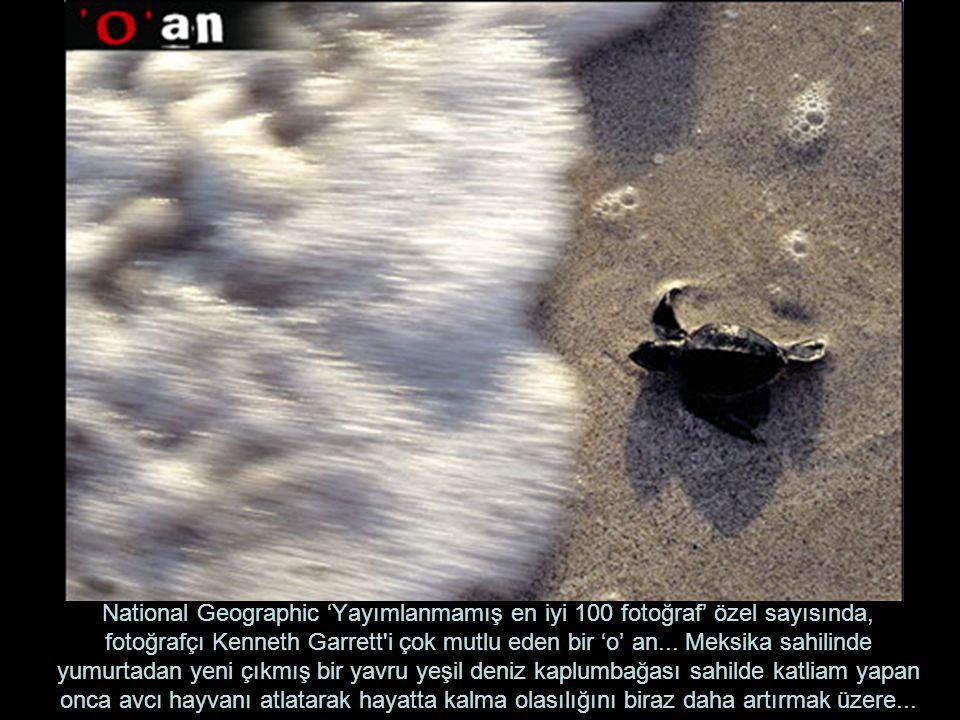 Fotoğraf Afganistan dan...
