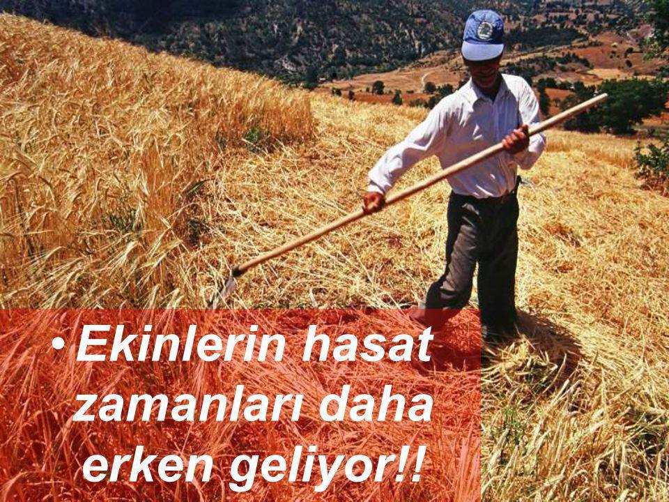 . •E•Ekinlerin hasat zamanları daha erken geliyor!!