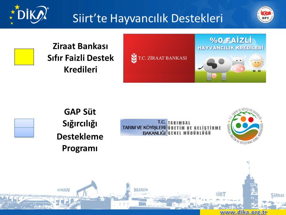Siirt'te Hayvancılık Destekleri Ziraat Bankası Sıfır Faizli Destek Kredileri GAP Süt Sığırcılığı Destekleme Programı